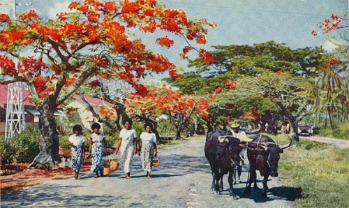 postcard of Lautoka Fiji, believed to be in 1956