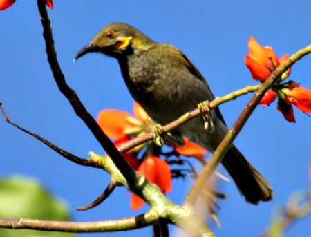 Birdwatching is a treat on your Fiji vacation on the outer islands.