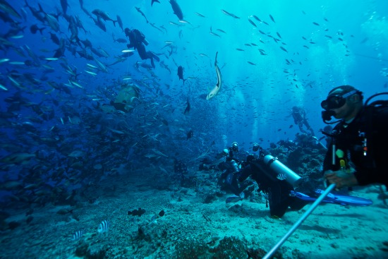 Beqa Island Fiji  City new picture : Beqa Lagoon Resort Fiji For access to Beqa Lagoon diving