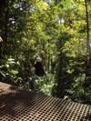 Ziplining through the forest
