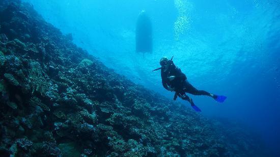 Vatulele diving
