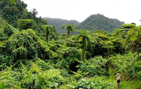 hiking on Taveuni on a Fiji holiday