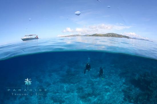 To dive Taveuni is a dream come true!